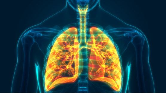 Lungs in orange