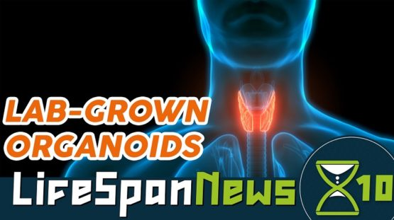 Researchers have grown mini thyroids.