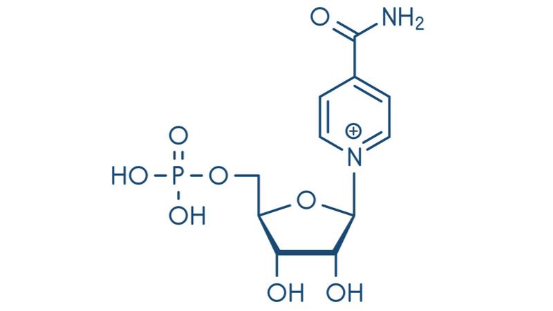 NMN分子
