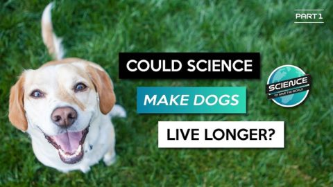 The dog aging project