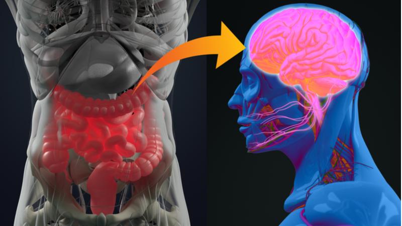 Gut brain inflammation